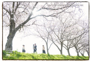 満開の桜の中で【入園・入学フォト】
