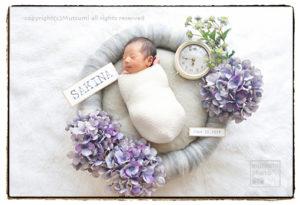 紫陽花の季節の新生児フォト