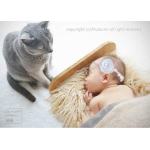 ネコと赤ちゃん【新生児フォト】